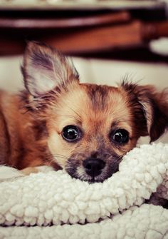 "500px / Photo ""Cozy Puppy"" by Sarah Bourque"
