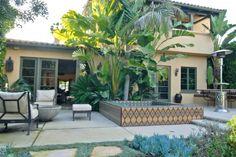 Landscaping:  Tropical plants:  Giant bird of paradise, king palms, succulents, dymondia