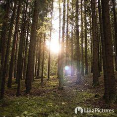 #herbst  #sunny #sonne #sun #fall #linz #linzpictures #igerslinz #mühlviertel #mood #potd #wald #upperaustria #igersaustria #wanderlust #landleben #urfahr #wandern #monday #weekday #travel