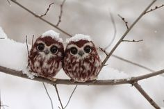 Two happy owlets - Imgur