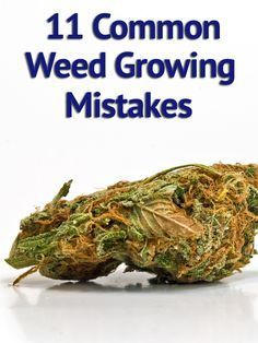Beginning Pot Grower? Don't Make These 11 Common Mistakes When Growing Marijuana!