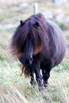63afc1d8a 11 Best Fat little horses images