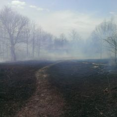 Sharon Hills ecological controlled burn a success!