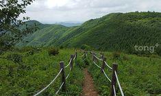 청량한 숲, 바람과 계곡 있어 좋아…'여름에 걷기 좋은 국립공원 길 7곳' Vineyard, Mountains, Nature, Travel, Outdoor, Korea, Outdoors, Naturaleza, Viajes