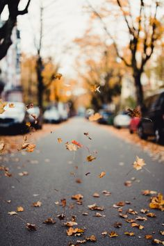 "martinlux: "" Autumn leaves - Freiburg, Germany Zeiss Otus 55mm @F1.4 - Rebecca Lily Pro Presets A European Escape martinlux.tumblr.com Instagram """