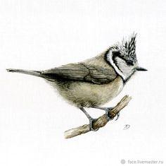Watercolor Illustration, Watercolor Paintings, Watercolors, Nature Journal, Bird Design, Wildlife Art, Bird Art, Animals And Pets, Birds