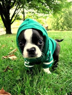 Puppy Pictures, Cute Puppies, Dog Pictures   Puppy Pictures Please!