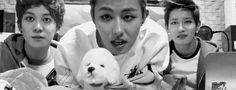 [GIF] Block B - Kyung, U Kwon and B-Bomb ... and dog