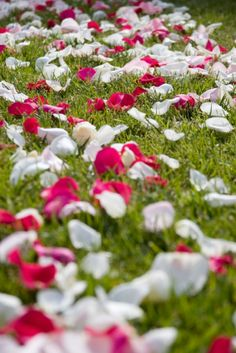 If you are concerned at all about your wedding venue decorations looking sparse, add rose petals! Rose petals are an inexpensive way to really tie together wedding and event decorations. Bulk rose petals can be used to line an aisle, decorate a cake table or create a trail leading to a business event or promotion. Shop wholesale rose petals online at www.GrowersBox.com.