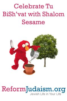 Watch these Shalom Sesame videos with your children to learn about Tu BiSh'vat, then try some of the fun discussion ideas and activities recommended by Reform Jewish educators.