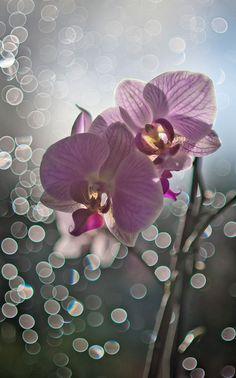 Raindrop Brokeh | Flickr - Photo Sharing!