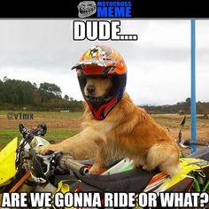 "Motocross & enduro webshop on Instagram: ""Its time to ride when your dog wants you to! Photo by @javierpeba_enbmotor . #mxmeme #motocross #dirtbike #suzuki #mxmemes #enduro #fmx #mx"""