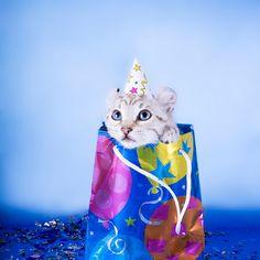 'Birthday Kitten' by idapix Cute Kittens, Cats And Kittens, Birthday Gift Bags, Cat Birthday, Happy Birthday, Birthday Wishes, Animal Party, Party Animals, Cat Party