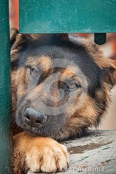 Adorable cute dog looks at the fence Creative Photos, Cute Dogs, Fence, Animals, Beautiful Dogs, Composite Fencing, Animales, Animaux, Animal
