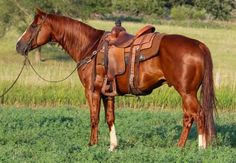 Flashy, Gentle, Seasoned Head/Heel/Ranch Gelding for Sale - For more information click on the image or see ad # 39627 on www.RanchWorldAds.com
