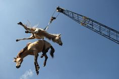 Moving horses in Indonesian port.