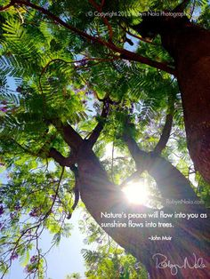 """""""Nature's peace will flow into you as sunshine flows into trees."""" –John Muir #healing #inspirational #nature #quotes #trees"""