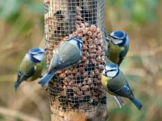 How to attract more birds to your garden, plus a great selection of birdhouses and feeders! How To Attract Birds, How To Attract Hummingbirds, Thorny Bushes, Decorative Bird Houses, Backyard Birds, Wild Birds, Native Plants, Beautiful Birds, Blue Bird