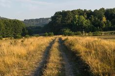 Field way