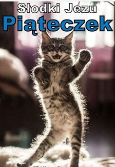 15 Of The Funniest Dancing Cat Pics You are i. - 15 Of The Funniest Dancing Cat Pics You are in the right place a - Cute Kittens, Cats And Kittens, Siamese Cats, Cute Baby Animals, Funny Animals, Smiling Animals, Dancing Cat, Dancing Animals, Gatos Cats