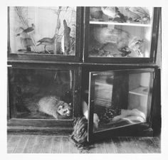 -Wilk stepowy w martwej naturze(Francesca Woodman, Untitled, Providence, Rhode Island, Francesca Woodman, Rhode Island, Peterborough, Museums In Nyc, Black And White Pictures, Black And White Photography, Creepy, Cool Stuff, Painting