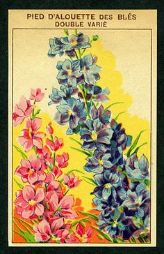 Antique French Seed Pack Label 1920's Flower Litho Pied D'Alouette Des Bles (13)