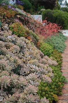 planting succulents on a slope helps with drainage therefore preventing rotting plants