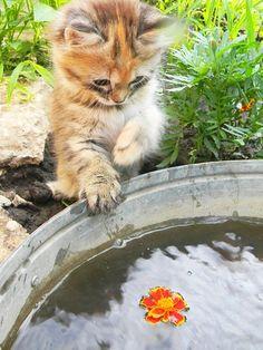 Как подготовить кошку к дачному сезону http://sunny7.ua/semja/domashnie-jivotnye/kak-podgotovit-koshku-k-dachnomu-sezonu