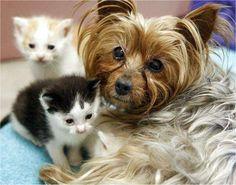 Essa linda cadelinha adotou uma ninhada de gatinhos :)