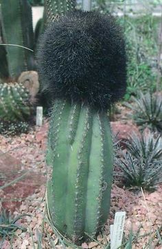 Guardsman Smythe survived the 'accident' in the sentry box - as he was reincarnated as a cactus.