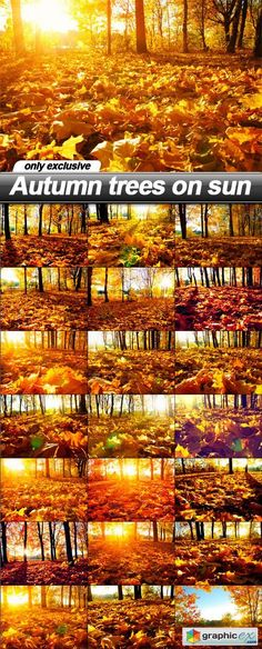 Autumn trees on sun  21 UHQ JPEG  stock images