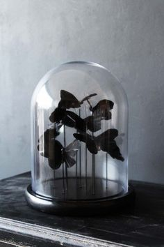 Black Butterflies Display Dome