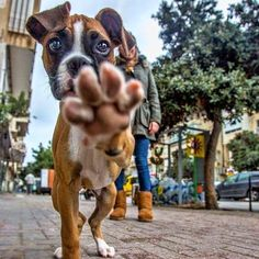 No picture, please call my agent for permission! #Boxer