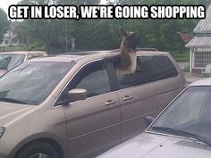 @kandacemil I think I should start a board for things with llamas. just for you :)