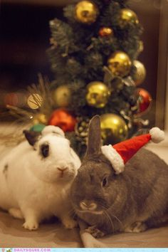 Santa's Little Helpers #bunnies