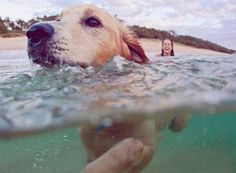 LOVE beach dogs! A dog's guide to Queensland's beaches http://blog.queensland.com/2014/03/14/dog-friendly-beaches/ #thisisqueensland
