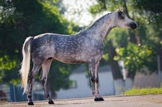 Terski horse farm