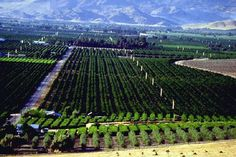 A farm in the San Joaquin Valley. Sequoia Forest, California Agriculture, San Joaquin Valley, Central Valley, California Love, Native American Indians, Great Places, North America, Farm Animals
