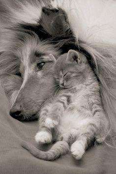 Ahh, eles amam nos dar uma surra moral, eles são capazes de viver com espécies tão diferentes e a gente cheios de probleminhas com nossos semelhantes! ??!!
