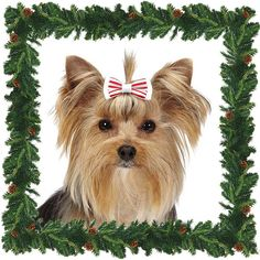Cool Peppermint Bow Barrettes for Dogs for Small Dogs