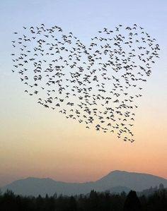 bandada de pájaros y el patrón de corazón