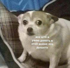Memes Humor, Man Humor, Cat Memes, Funny Humor, Stupid Cat, Stupid Memes, Animal Memes, Funny Animals, Hello Memes