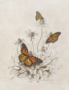 Callidryas eubule and Terias mexicana by William H. Lizars, circa 1858 William H. Lizars of Edinburgh was an establ. Botanical Tattoo, Botanical Drawings, Botanical Flowers, Botanical Prints, Butterfly Illustration, Nature Illustration, Botanical Illustration, Illustrations, Art Design