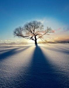 678x866, 146 Kb / снег, поле, дерево, солнце