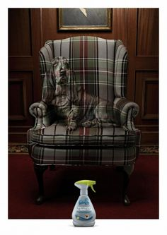 Febreze [Grey] I Pet odor eliminator I Lord's Dog - My Brand Friend Creative Advertising, Print Advertising, Marketing And Advertising, Advertising Ideas, Advertising Campaign, Funny Commercials, Funny Ads, Procter And Gamble, Pet Odor Eliminator