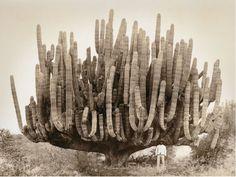 liverodland:Sculptural nature galore: A very, very large organ...