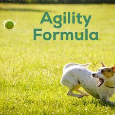 Our Agility supplement is a holistic formula.  This formula helps maintain healthy joint cartilage and connective tissue, and to aid in the production of healthy synovial fluid, which lubricates the joints. This supplement features Glucosamine, MSM, sea mussels and hyaluronic acid. Agility Formula is a holistic, multi-action joint support formula containing scientifically-tested ingredients.