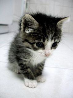 Cute Little Cat For My Future Home - Click for More...