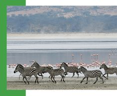Tanzania Budget Safari is designed to offer the best scenario of Tanzania! Book Budget Tours In Tanzania with Wild Root Safaris for the exciting adventure.