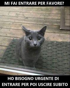 L'immagine può contenere: gatto e sMS